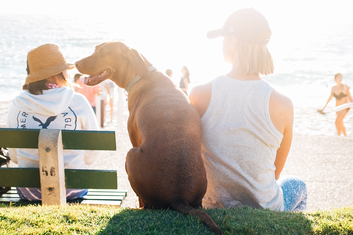 Family dog beach